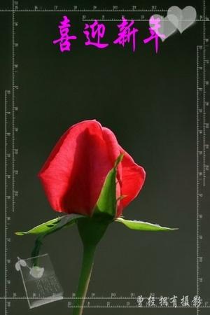【原创摄影】恭贺新禧 - 曾经拥有 - 我的摄影花园