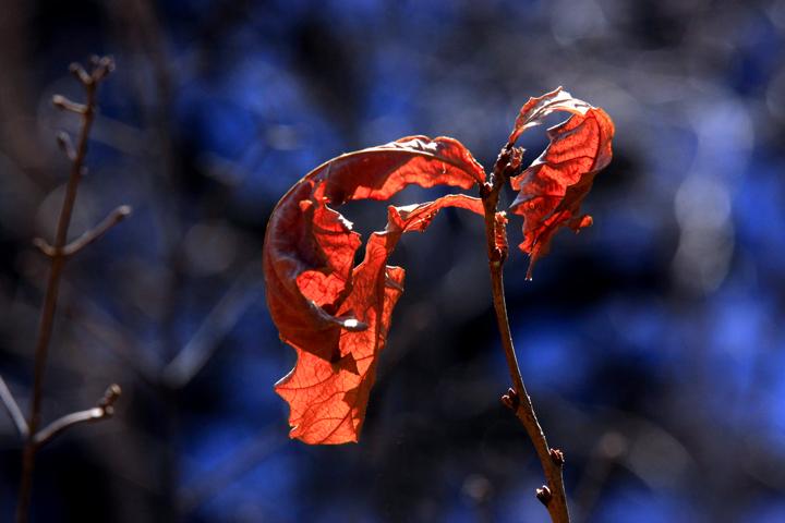 (原创摄影)死亡也美丽 - 刘炜大老虎 - liuwei77997的博客