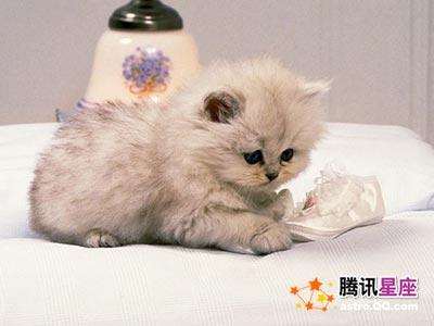猫 - 刘佳 - 刘佳的美丽佳苑