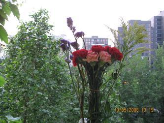 我为INGE买花 20080510