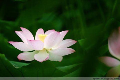 (原创)红颜如花(2) - 平子 - 平子博客