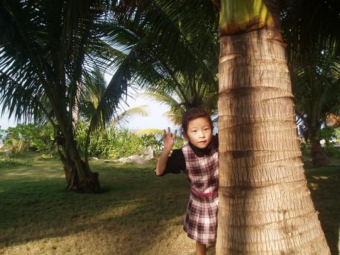 海南的椰树 - jiaheteng - 小女阿贝的博客