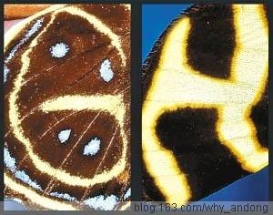 86岁摄影师24年拍全蝴蝶翅膀上的26个字母 - 蝴蝶 - 女人天下
