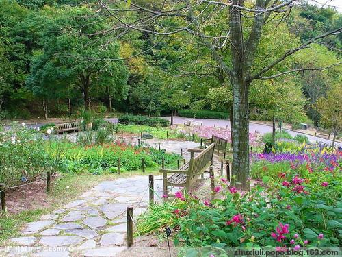 2008年9月9日 - 紫蔷薇 - 紫蔷薇的博客
