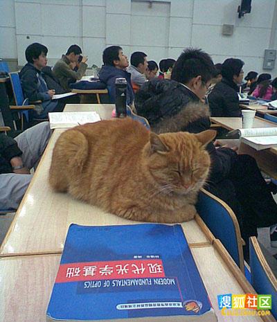 细数2009年十大网络红人 - 哥们干杯! -