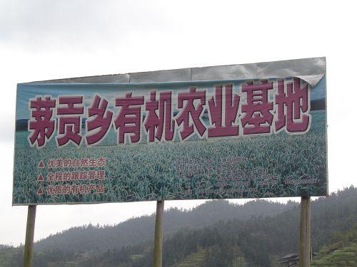 流芳村:鱼鸭稻共作有机农业 - 悟之诗语 - 梦幻人生 诗意栖息