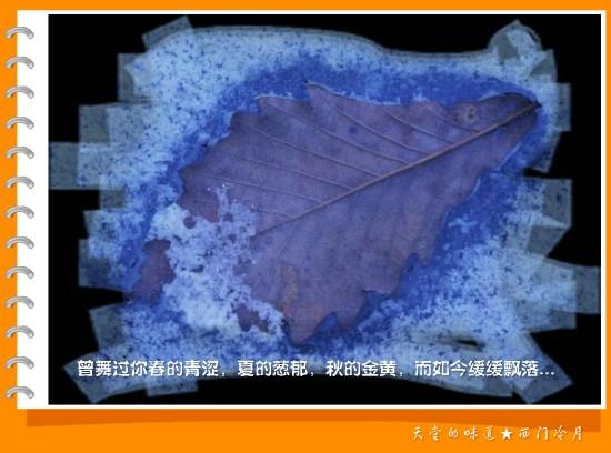 【天堂图韵】那片飘零的枯叶 - 西门冷月 -                  .