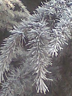 第一场雪 - Lilac - Lilac