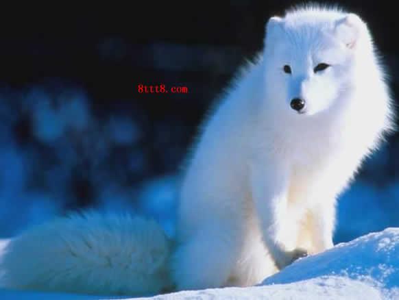 虚云老和尚与白狐的一段因缘