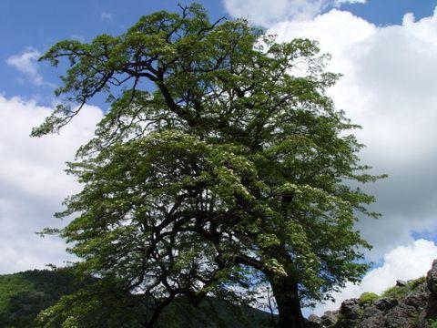 一棵开花的树  席慕蓉 - angel.yzx - 惠风和畅