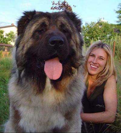 转] 世界上十种最厉害的狗 - 君客 - 必须的,欢迎您!