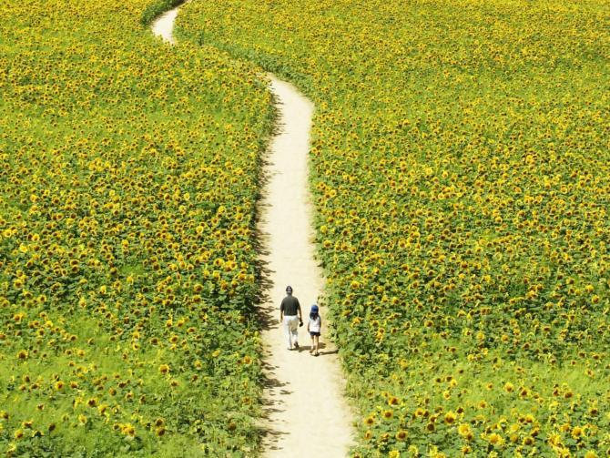 路,没有错的,错的只是选择 - 弱  之 - 雨后新野