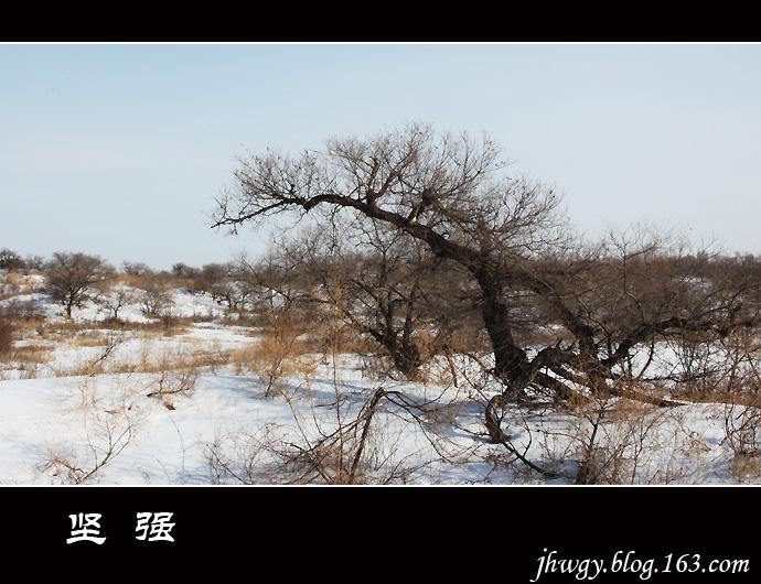 [原]走向寒冷——坚强 - 生有所息 - 生有所息