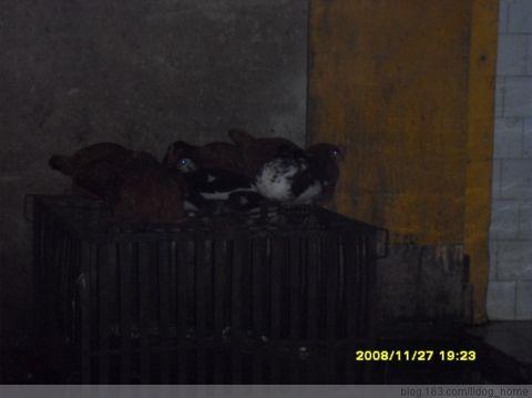 血泪救助大邑狗狗---屠刀下狗狗 ! 我拿什么来拯救你(二) - 四川启明小动物保护中心 - 四川启明小动物保护中心