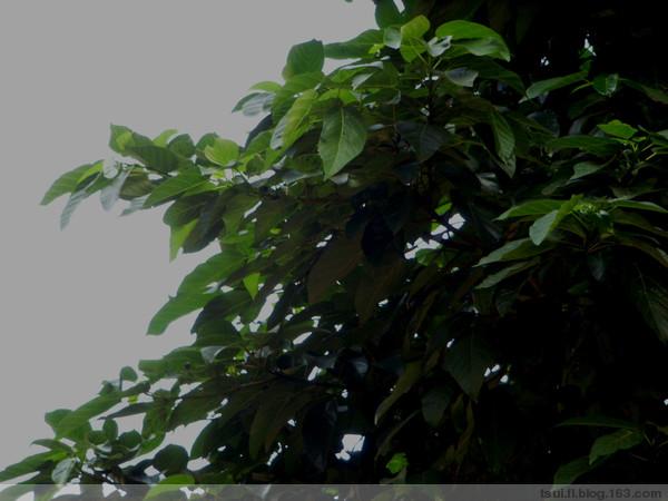 干花榕〔原创〕 - 狮子山上雾茫茫 - 狮子山上雾茫茫攝影集 的博客
