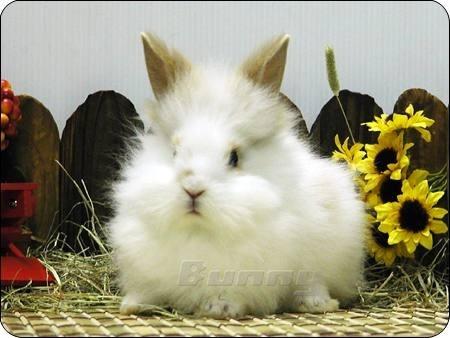 撩兔子的萌萝卜- 过兔年必需看小兔兔,呆兔萌兔各种兔图片
