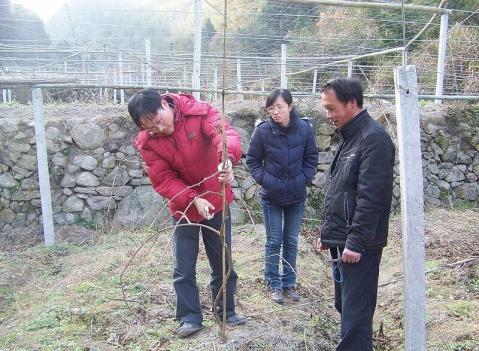 上海市农科院骆军研究员来访 - 清扬 - 花果飘香