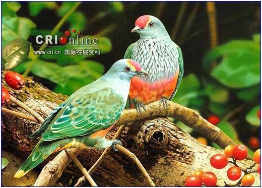 世界上最美丽的九种鸟(超美的组图)--转(太漂亮了) - 红莲欢迎您 - 红莲