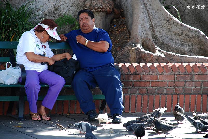 加州阳光(四)__洛杉矶印象 - 西樱 - 走马观景