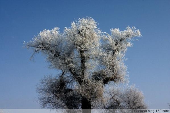 回望流年 寒霜 散文 原创 - wsq.517 - wsq.517的博客