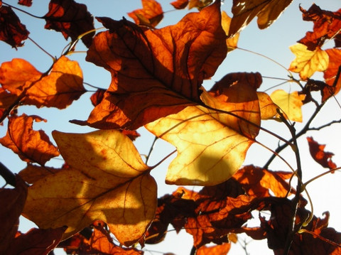 【转载】一草一世界,一叶一菩提,一笑一尘缘,一念一清静 - 金子 - 我的博客