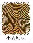 从你的食指指纹可看出你的爱情观(奇准,配图) - 风之子 - 风之子的博客