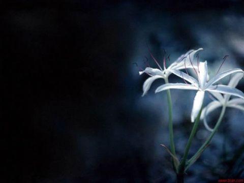 黑夜中的文字[原创] - 风 - 风雨轩