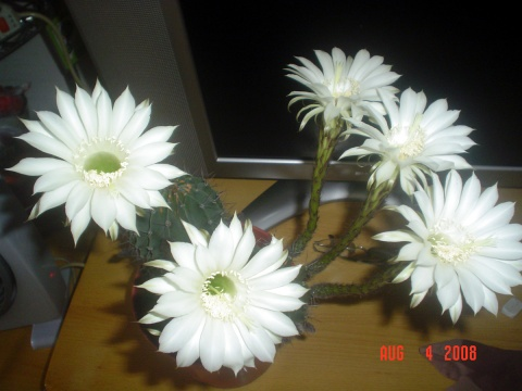 花——总是女人的心爱 -  小木屋   - 小 木 屋