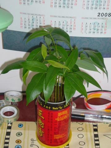猜猜这个是什么植物? - petcon - petcon的博客