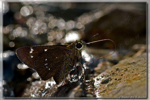 [原创]独竖一帜-弄蝶 - Cheni - Cheni的蝴蝶馆