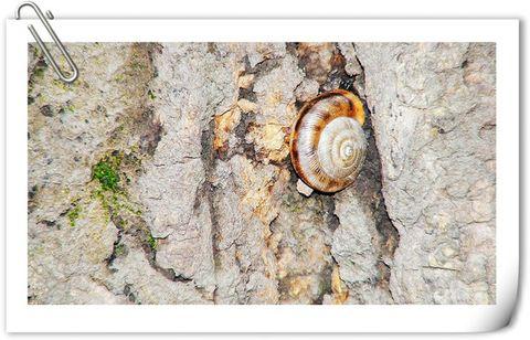蜗牛--生存哲学 - 798DIY - 798 DIY 陶瓷家饰