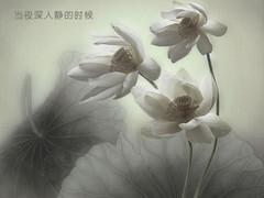 『原创诗乐』相思渺如烟 - 凌波仙 - 无花果-无花果(凌函君)