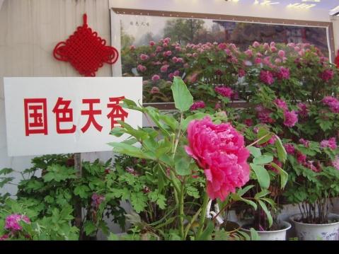 【乐天谷纪事】来自两位老师的春信息 - 乐天蓝鹰 - 乐天蓝鹰的博客