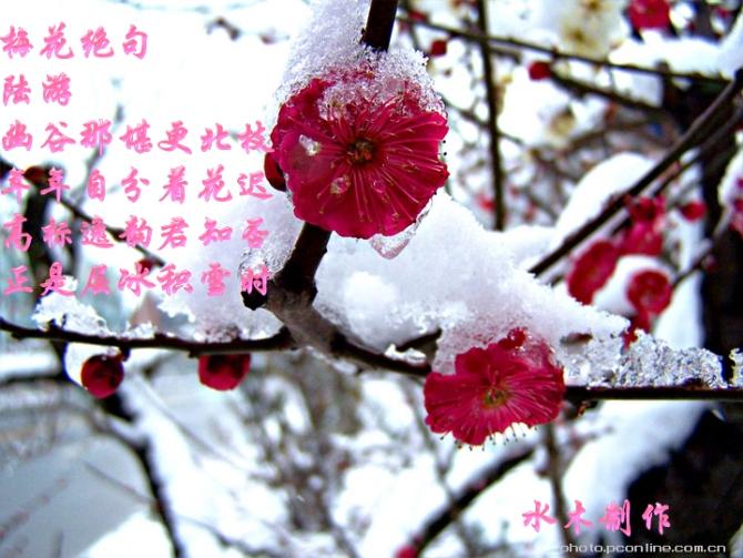 梅雪诗意图 - 孙金龙 - 孙金龙