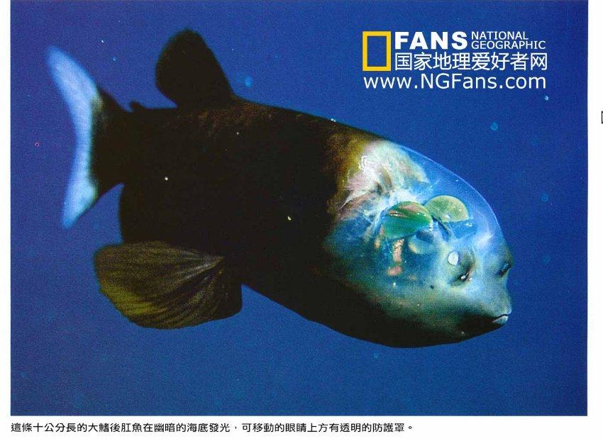 猜猜这条鱼的眼睛在哪? - bldr - Georges blog