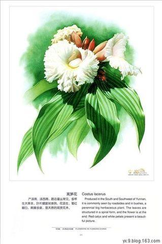 欣赏 手绘百草图(之二) - 思慧 - NorthWest