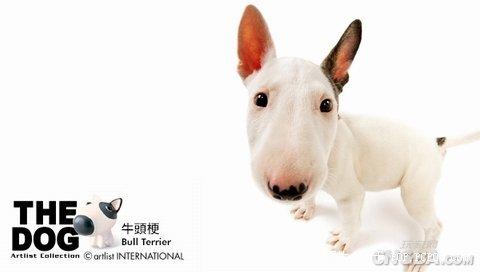 Cute Dog…  - 思源 - 平凡的唯美