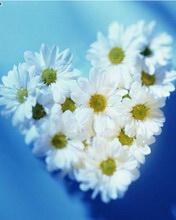 花开①次——非主流图片 - 冰思绕指柔 - 冰思绕指柔的博客