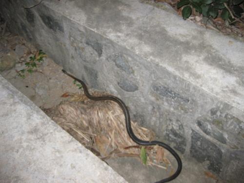 5月6日放生蛇——观世音菩萨关爱我们也同样关爱蛇 - 阿德 - 深圳放生