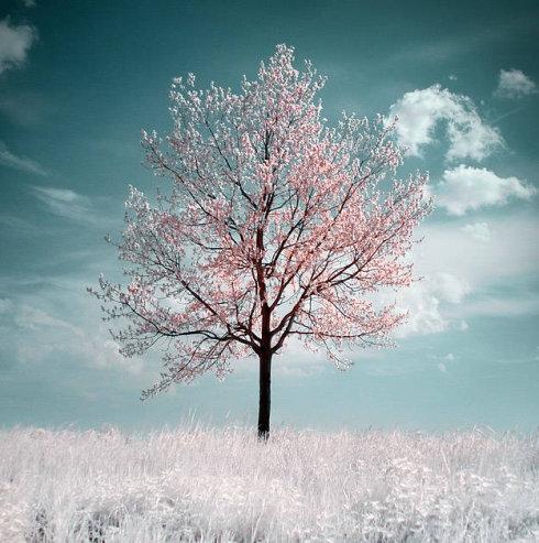 席慕容的《一棵开花的树》 - 坚持到底 - 坚持到底