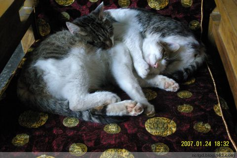 祭奠我家的猫咪                                                                 祭奠我家的猫咪                   - 云中雨燕 - 云中雨燕的博客