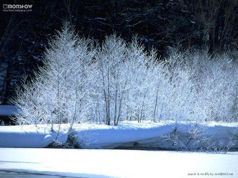 冬雪(原创) - 梦景红花 - 梦景红花的博客