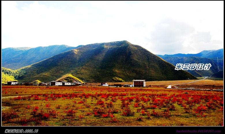 云南2008--香格里拉(一) - 米亚罗红叶 - 米亚罗红叶