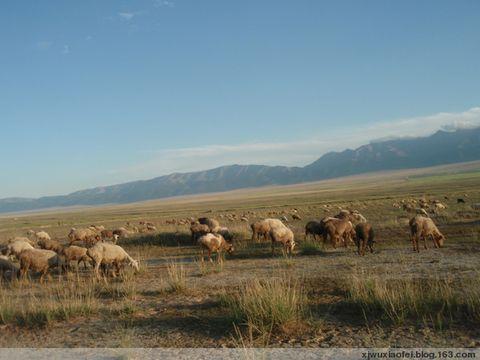 放羊娃 - 红色毛芨芨 - xjwuxiaofei的博客