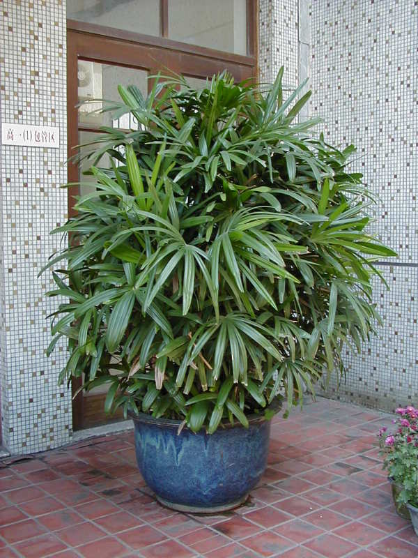 14种植物放入室内的功效 - 高山流水 - 幸福乐园