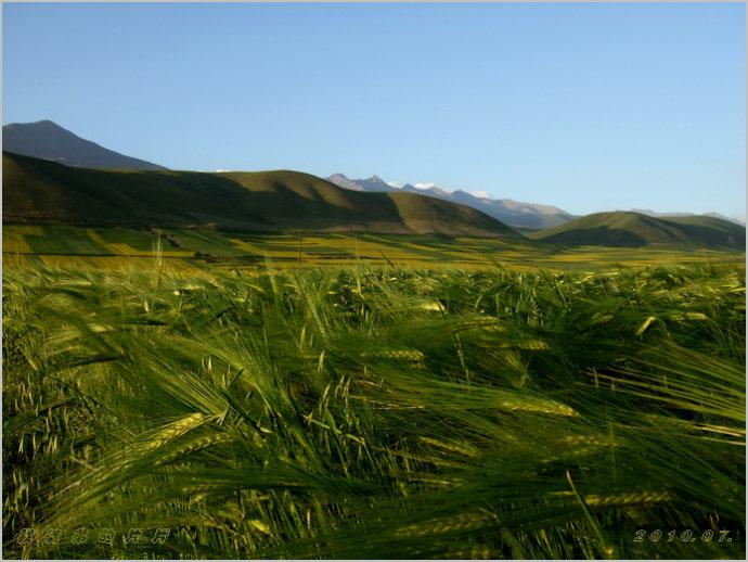 大美青海.甘肃的近邻_行走在西部的草原_新浪博客 - 行走在西部的草原 - 行走在西部的草原