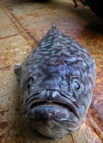稀奇古怪的海洋动物  - 愚人 - 愚人 似愚非愚 愚与形而慧与心