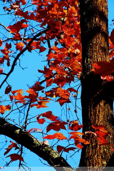 第二辑《南雄帽子峰红枫林》 - RZJ摄影屋 - RZJ摄影屋的博客