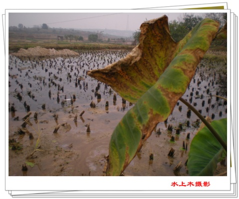 冬至时的残枝败叶与熟果 - 水上木 - 水上木的博客
