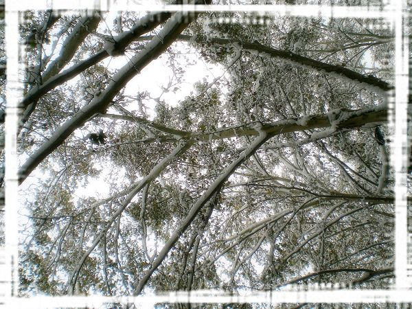下雪了下雪了~!2009第一场雪~! - 香説 - 听 香説...